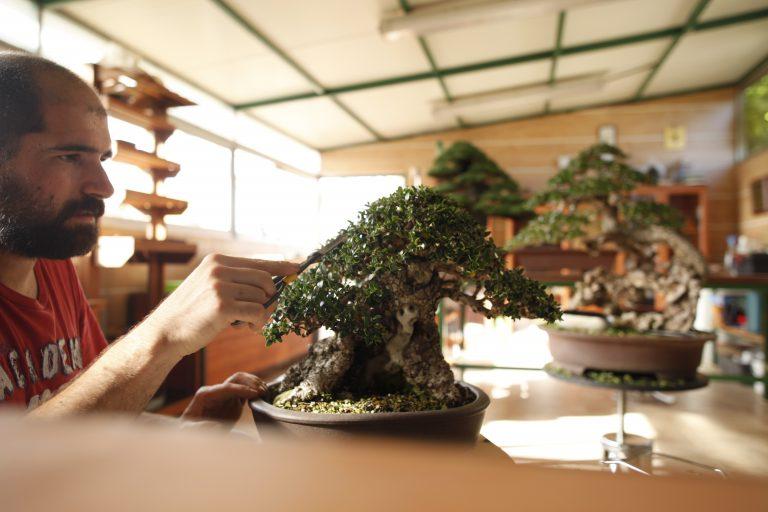 Taller de bonsai barcelona